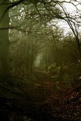 woodland walk by dantomas