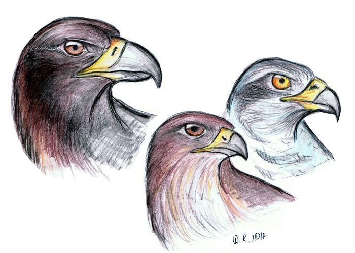 Birds Of Prey by Mimose91