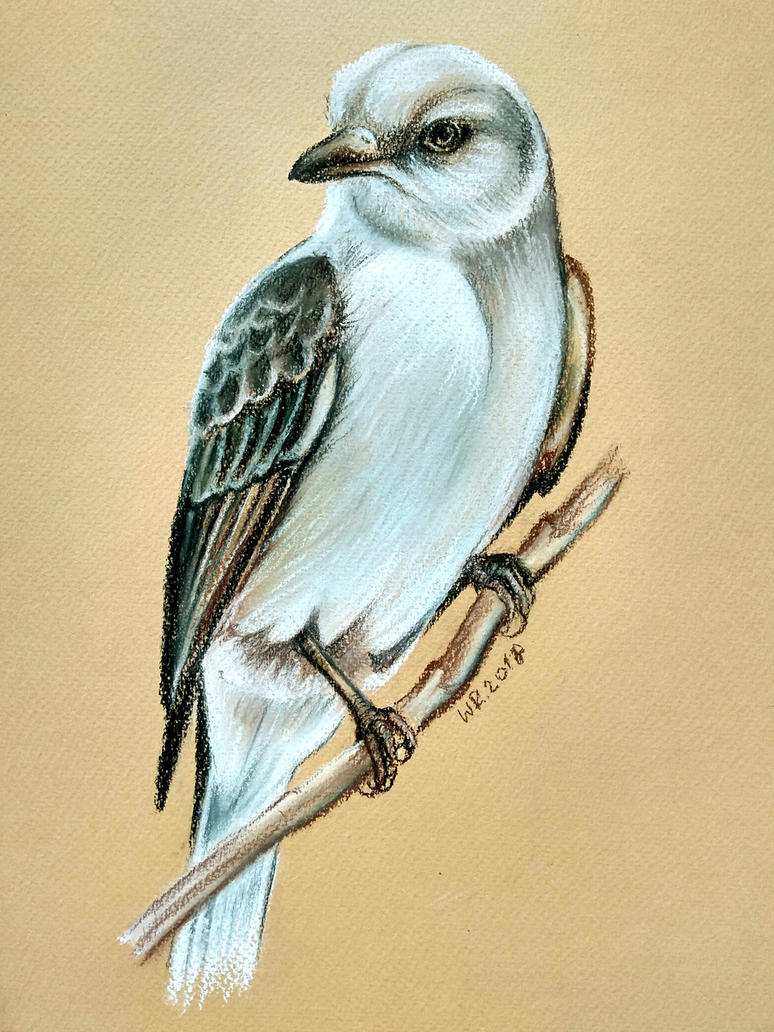 Flycatcher by Mimose91