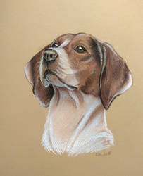 Dog Portrait by Mimose91