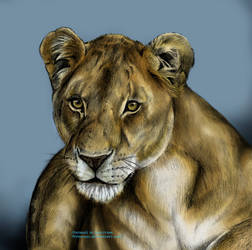 Lioness II by Mimose91