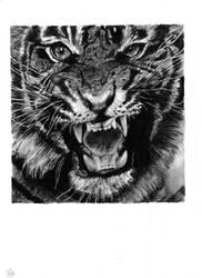 Tiger by Skippy-s