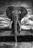Elephant by Skippy-s