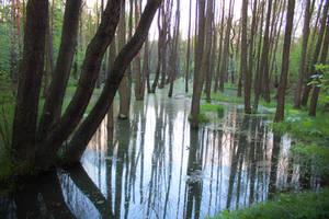 Swamp #1 exterior #00003 - CC Free Stock by PeterKmiecik