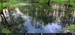 Swamp Pond #2 exterior #00007 - CC Free Stock