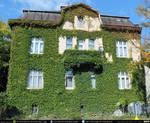 Ivy House #00030 CC Free Stock