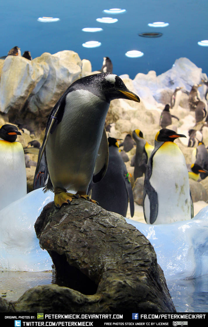 Free Stock Penguin Animal Ice Bird Water Light by PeterKmiecik