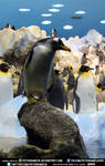 Free Stock Penguin Animal Ice Bird Water Light