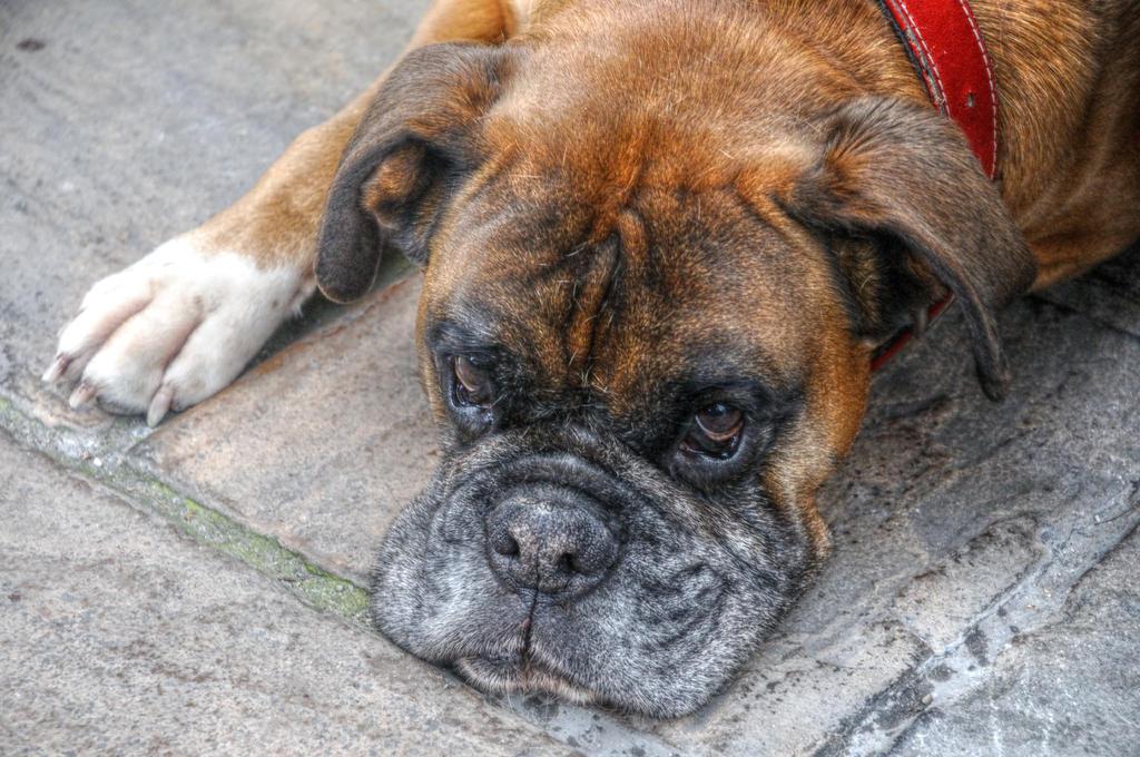 Lewis II - Dog Tired by teslaextreme