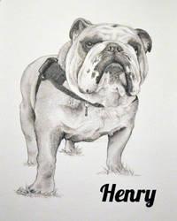 Commission: Henry the English Bulldog