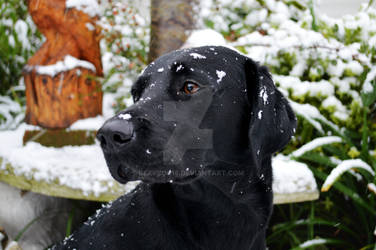 Molly in the Snow #1