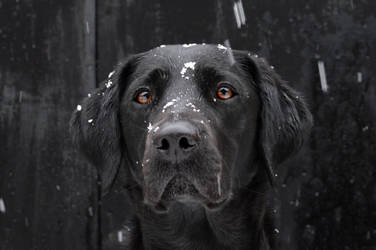 Molly in the Snow #2
