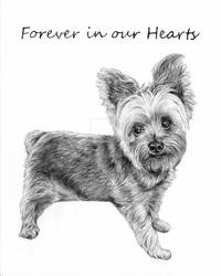 Commission: Lilly the Yorkie