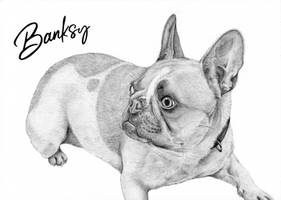 Commission: Banksy the French Bulldog