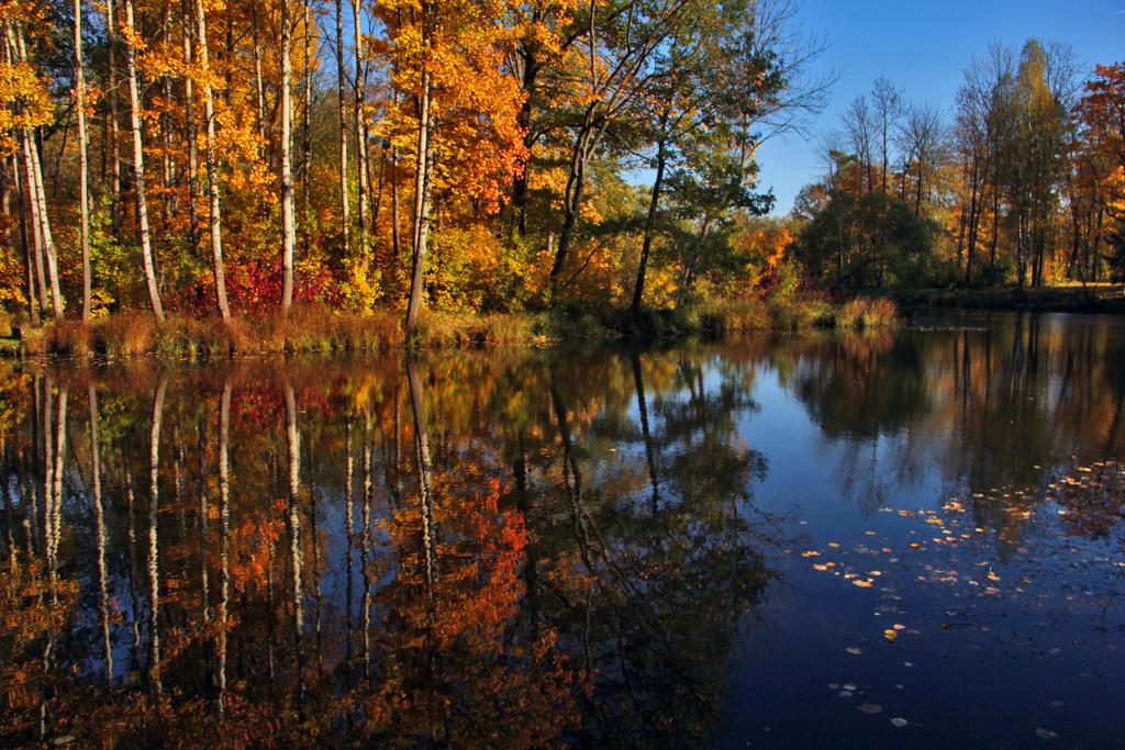 Autumn by Nietra