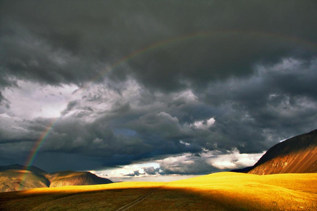 Rainbow by Nietra