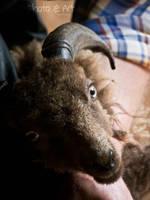 Shear the Sheep by Artelanas