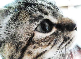 Kiba's eye
