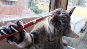 A cat is a beautiful art