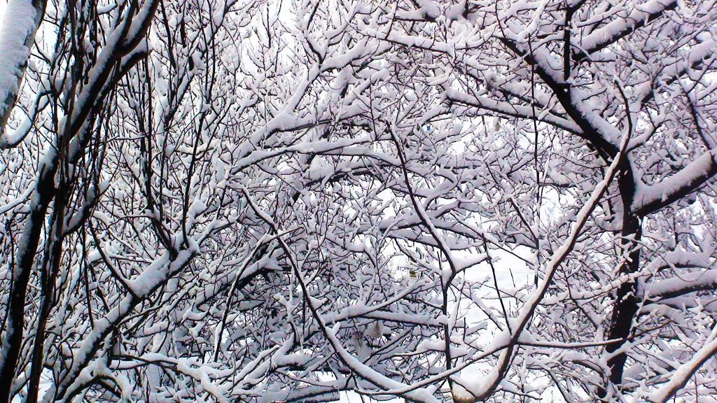 Snowy tangle by CamaroLp