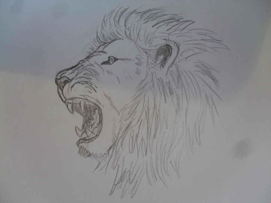 Angry Lion Drawing