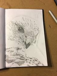 Hawk by yocoro