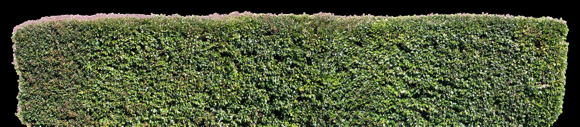 Road Sunset Wallpaper Plant Syzygium smithii...