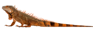 Reptiles 020