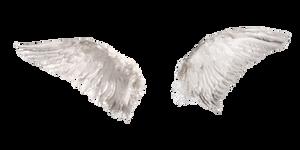 White Angel Wings 2 (4)