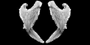 White Angel Wings 2 (1)