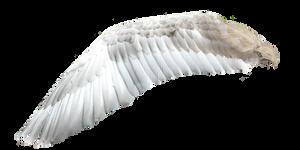 White Angel Wings 1 (7)
