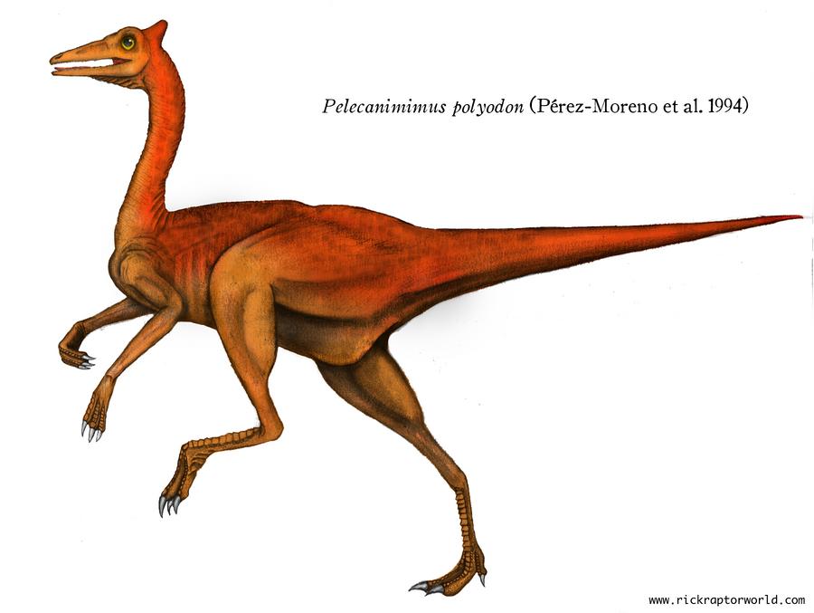 Pelecanimimus polyodon (profile) by rick-raptor