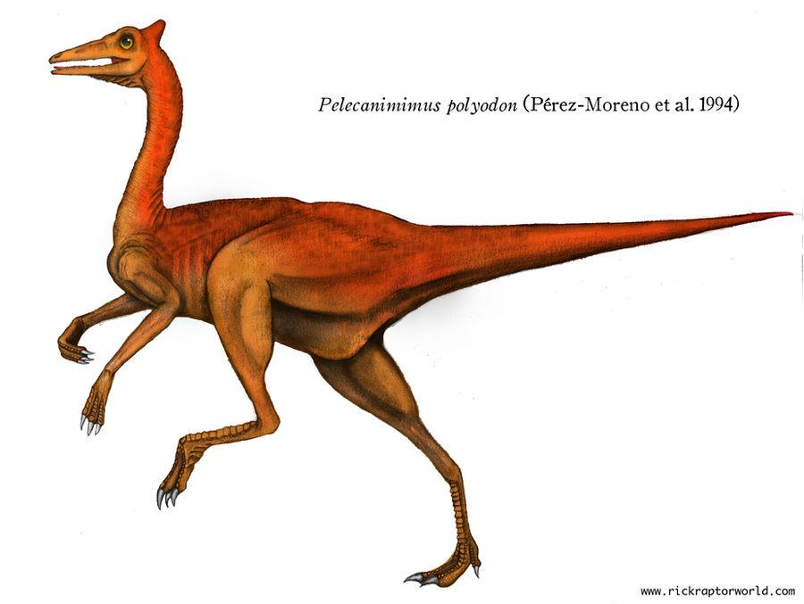 Pelecanimimus polyodon (profile)