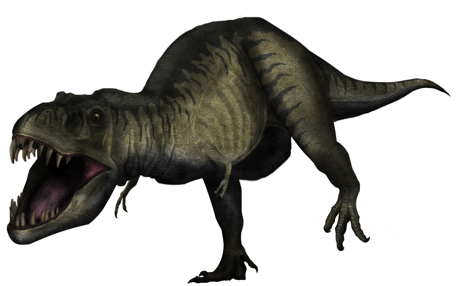 Tyrannosaurus rex by rick-raptor
