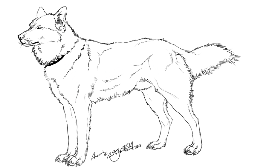 -Free Husky Outline- by WhiteSpiritWolf