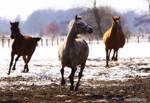 .Running Free. by WhiteSpiritWolf