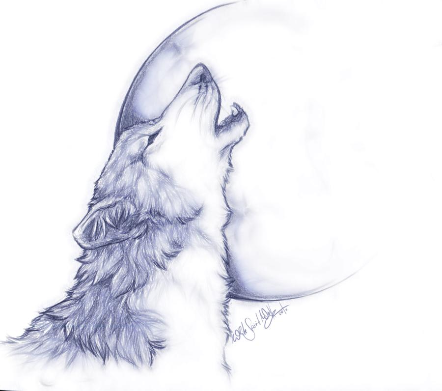 Black Wolf Howling Drawing Grey Wolf Howli...