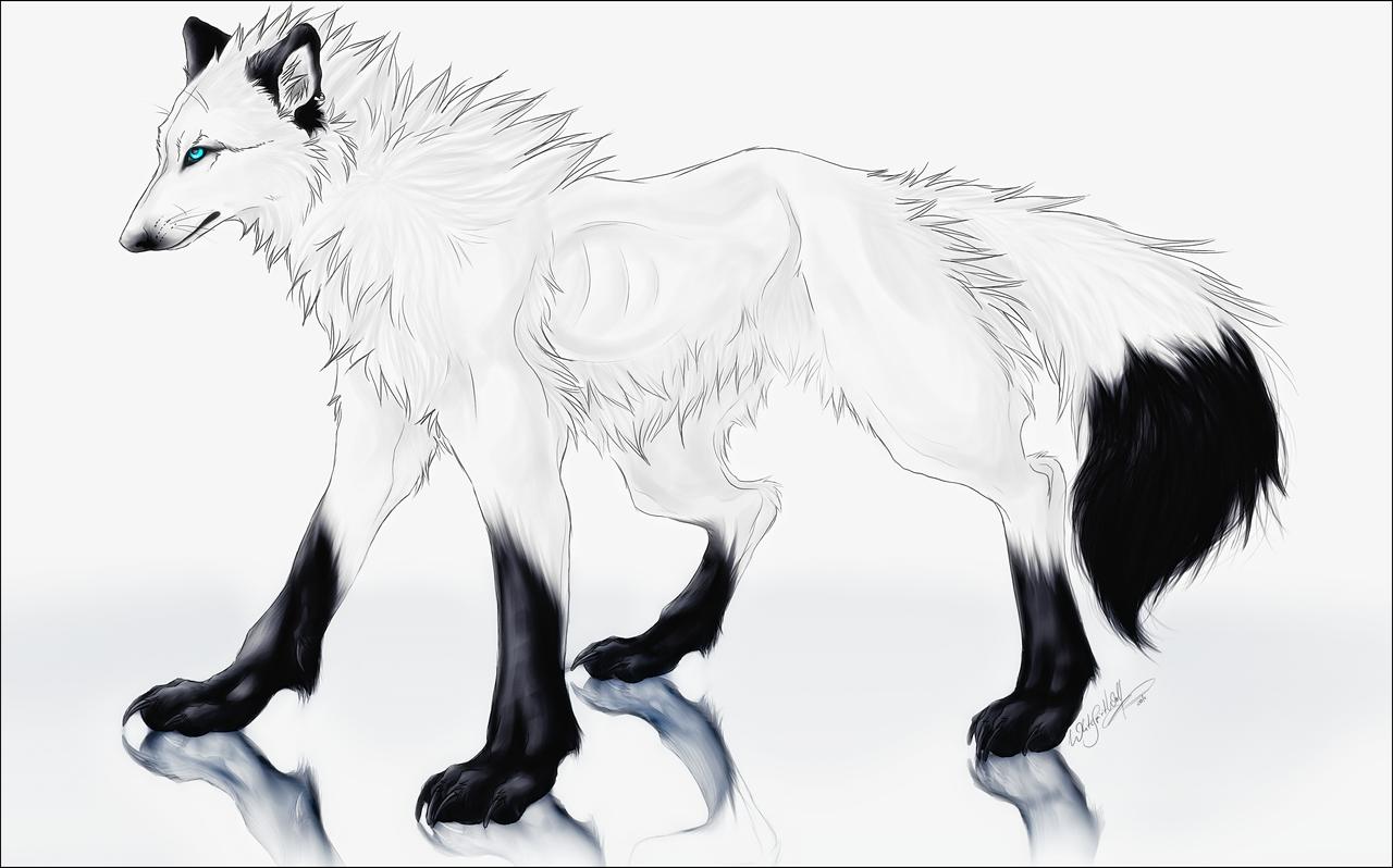 white anime wolves 2623 usbdata