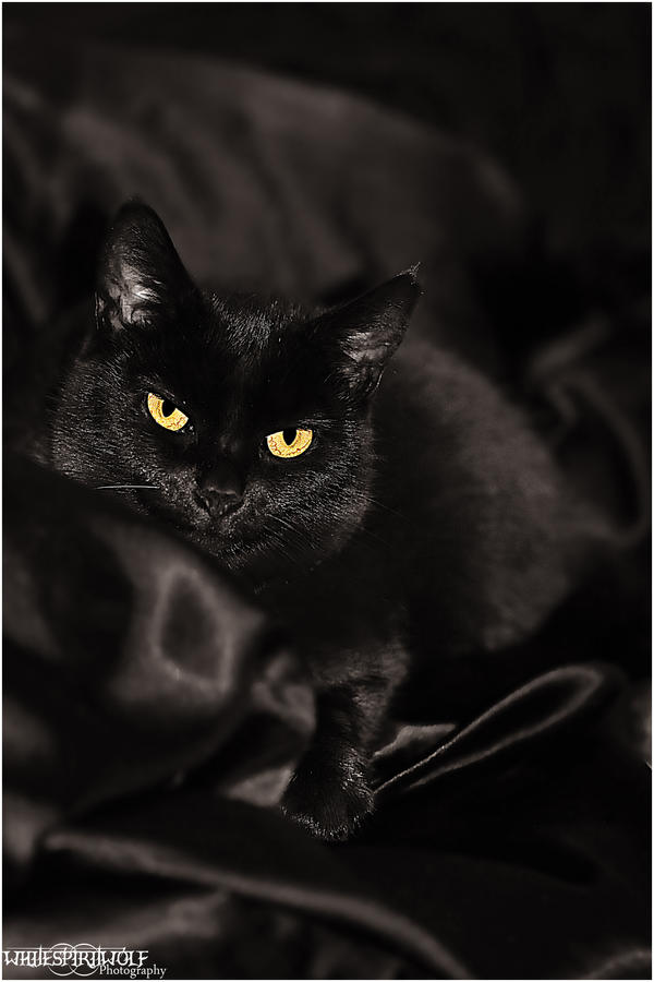 .:Black Tarn Cat:. by WhiteSpiritWolf