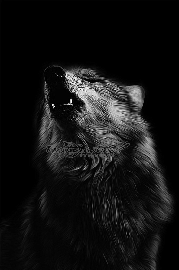 Black Wolf Howling Drawing .:Black Howl:. ...