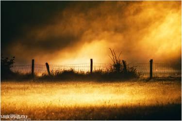 ..golden mist.. by WhiteSpiritWolf