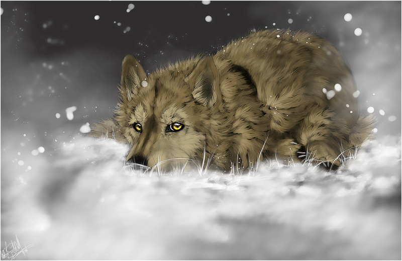 Wolf's Rain .:Hige:. by WhiteSpiritWolf