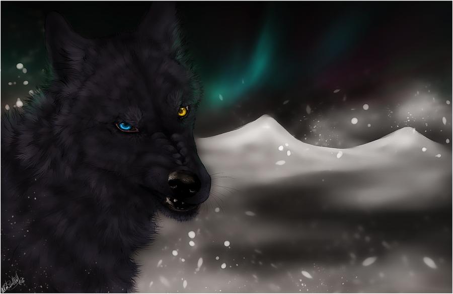 Wolf's Rain .:Darcia II:. by WhiteSpiritWolf