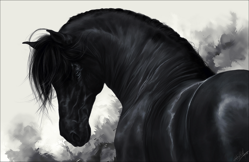 Pure Black on Pinterest | Black Horses, Picasa and Black ...