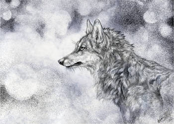 .:To the Wolves:. by WhiteSpiritWolf