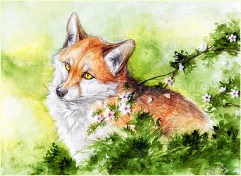 .:Sly the fox:. by WhiteSpiritWolf