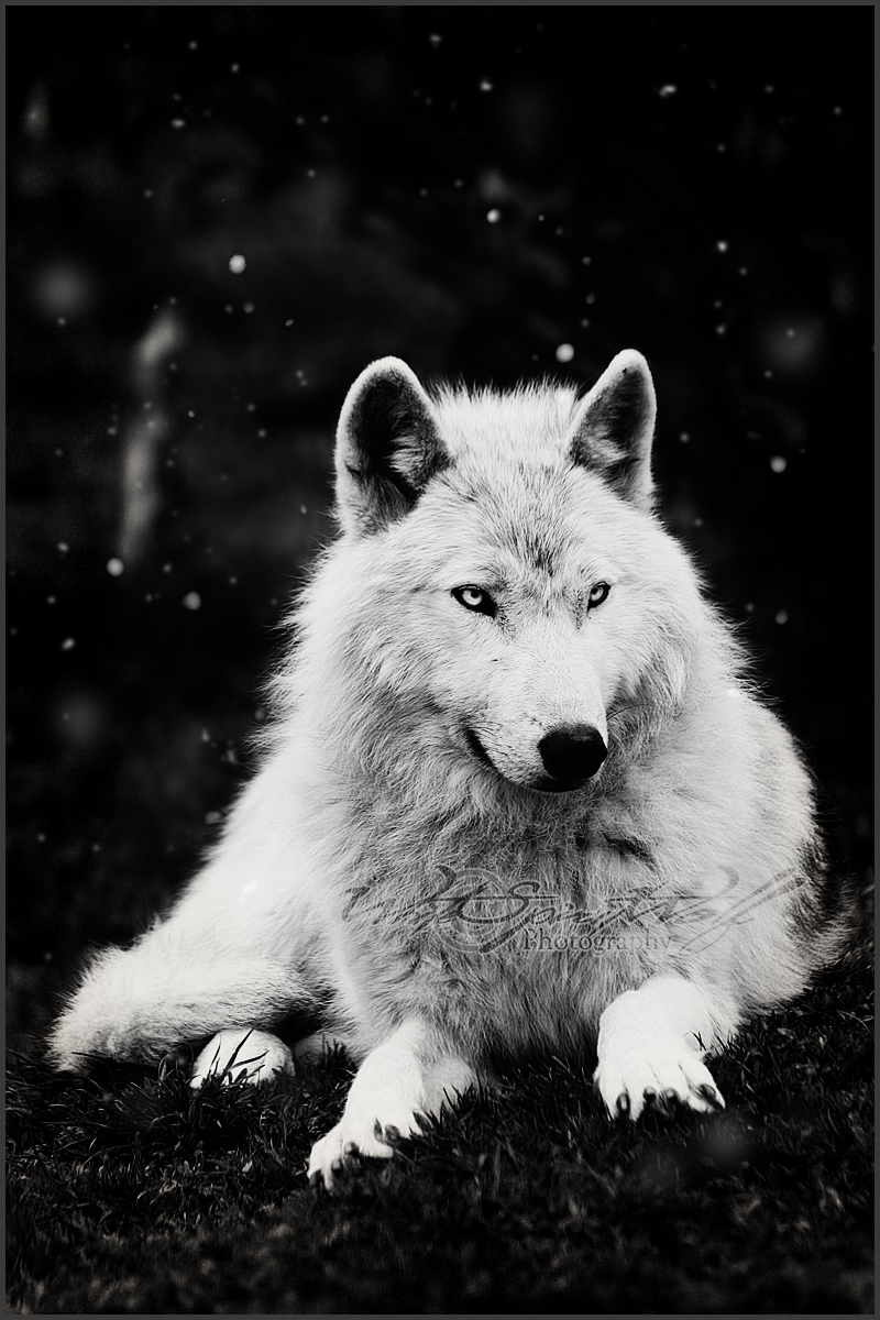 .: Snowfall :. by WhiteSpiritWolf