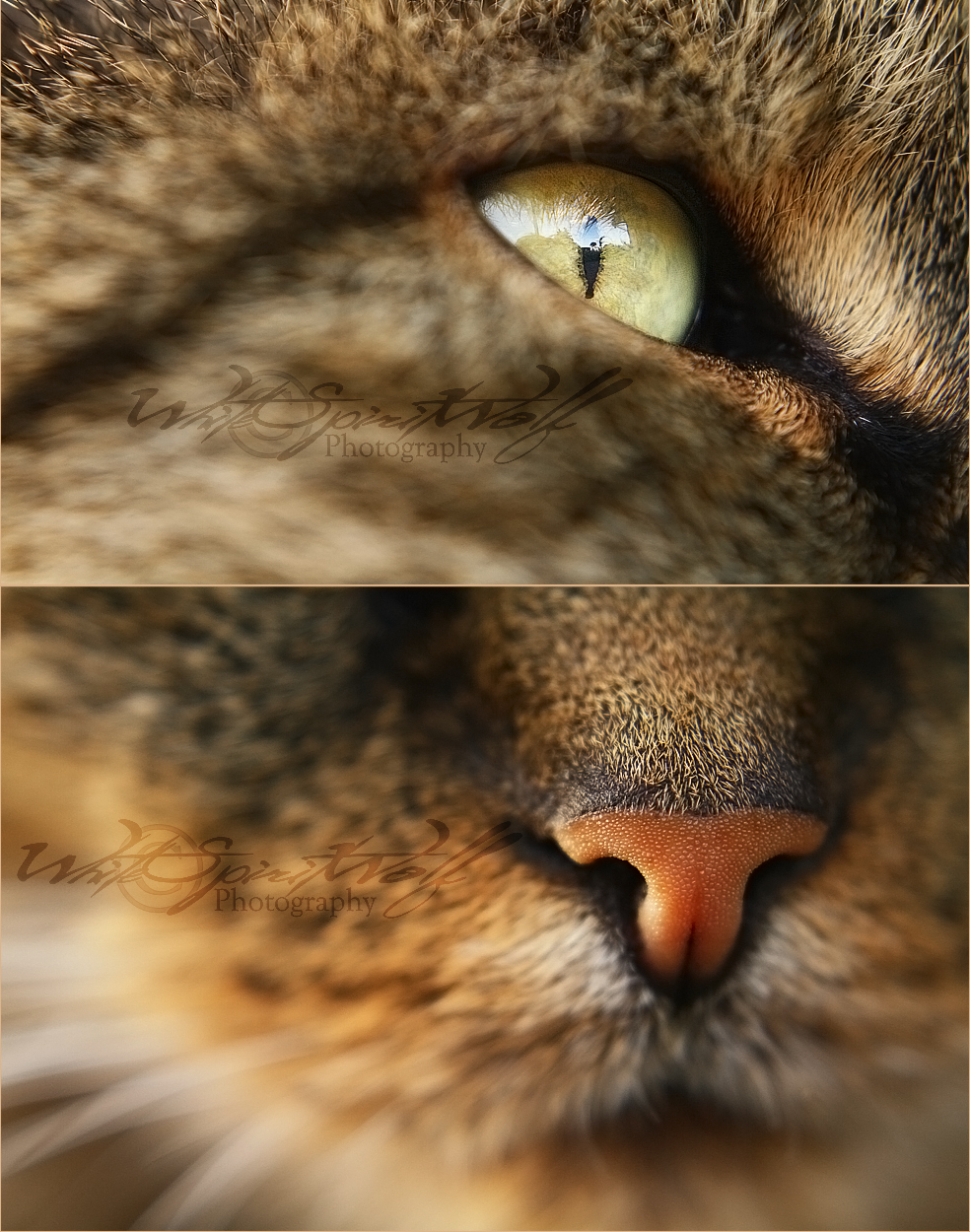 .: Eye 'n' Nose :. by WhiteSpiritWolf