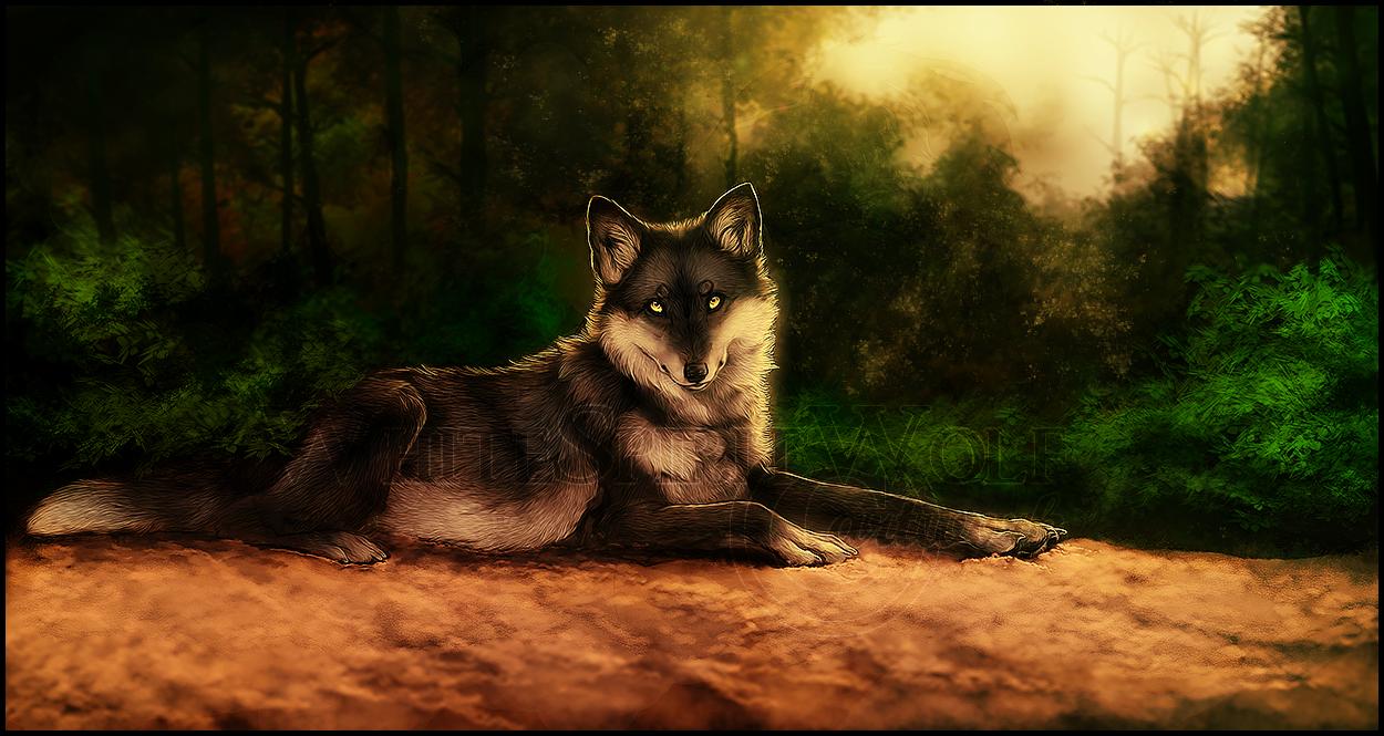 .: Forest Resting :. by WhiteSpiritWolf