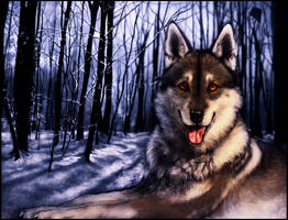 [Charity] .: Snowy Forest :. by WhiteSpiritWolf